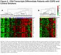 CD4+ T-Cell Profiles and Peripheral Blood Ex-Vivo Responses to T-Cell Directed Stimulation Delineate COPD Phenotypes